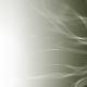 Nueva página web de DaliaPozo